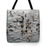 Happy Sea Lions In Santa Cruz Tote Bag