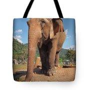 Happy Thai Elephant In Chiang Mai Tote Bag