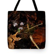 Harbinger Of Spring In Lost Valley Tote Bag
