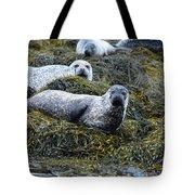 Harbor Seal Colony At Loch Dunvegan Tote Bag
