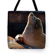 Harbor Seal In The Sun Tote Bag