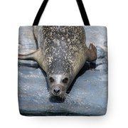 Harbor Seal Ready To Plunge Into The Water Tote Bag