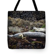 Harbor Seals Basking - Oregon Coast Tote Bag