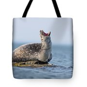 Harbour Seal Tote Bag