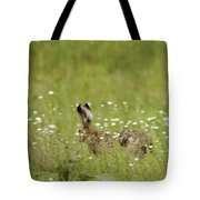 Hare On The Run Tote Bag