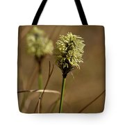 Hare's-tail Cottongrass 1 Tote Bag