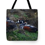 Harlequin Ducks  Tote Bag