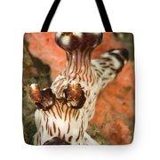 Harlequin Shrimp Hymenocera Elegans Tote Bag
