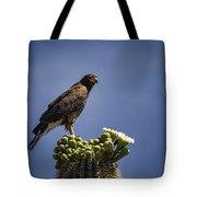 Harris Hawk Atop A Saguaro  Tote Bag