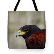 Harris Hawk Portrait Tote Bag
