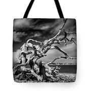 Haunting Beauty Tote Bag