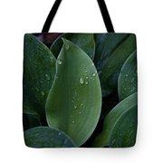 Hosta Dew Drops Tote Bag