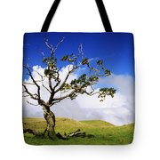 Hawaii Koa Tree Tote Bag