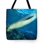 Hawaiian Monk Seal Tote Bag