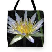 Hawaiian Water Lily 05 - Kauai, Hawaii Tote Bag