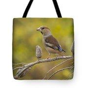 Hawfinch Coccothraustes Coccothraustes Tote Bag