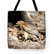 Hawk And Gecko Tote Bag by George Randy Bass
