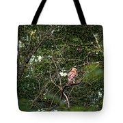 Hawk Drying Out Tote Bag
