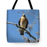 Hawk Eye Contact Tote Bag