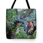 Hawk In Sunlight Tote Bag