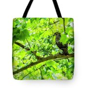 Hawk In Sycamore Tote Bag