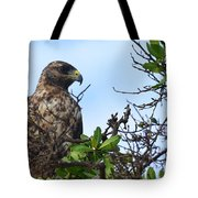 Hawk In The Tree Tote Bag