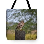 Hawk On A Fence Post Tote Bag