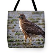 Hawk On A Walk Tote Bag
