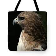 Hawk Portrait Tote Bag