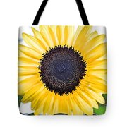 Hdr Sunflower Tote Bag