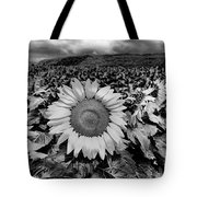 Hdr Sunflower Field. Tote Bag