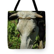 Head Of A Holstein Cow With Horns Tote Bag