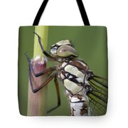 Head Of The Dragonfly Tote Bag