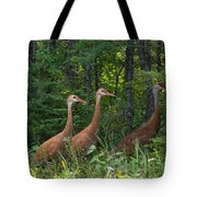 Headed For The Woods Tote Bag