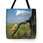 Heading For A High Spot Tote Bag