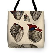 Heart, Anatomical Illustration, 1822 Tote Bag
