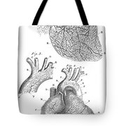 Heart Anatomy, Illustration, 1703 Tote Bag