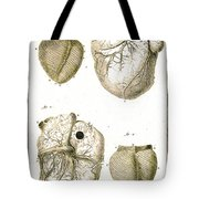 Heart And Muscle Fibers, 18th Century Tote Bag