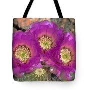 Hedgehog Cactus Triplets Tote Bag