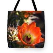 Hedgehog Flowers In Dawn's Early Light  Tote Bag