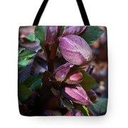 Heliborus Early Flower Buds 1 Tote Bag