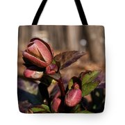 Heliborus Early Flower Buds 2 Tote Bag