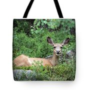 Hello From A Deer Tote Bag