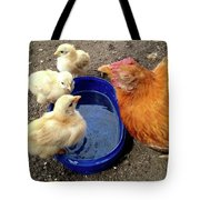 Hen With Her Yellow Chickens Tote Bag