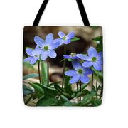 Hepatica Blue Tote Bag by Lori Frisch