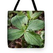 Herb Paris Tote Bag