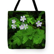 Herb Robert On The Ma At Tote Bag