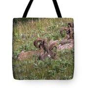 Herd Of Bighorn Sheep Tote Bag