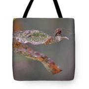 Here's Lookin' At You- Dragonfly Tote Bag
