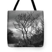Hermit Island Tree 0192 Tote Bag